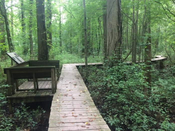 As you follow the curves and bends of the boardwalk, you're likely to to hear the sounds of singing songbirds and croaking frogs.