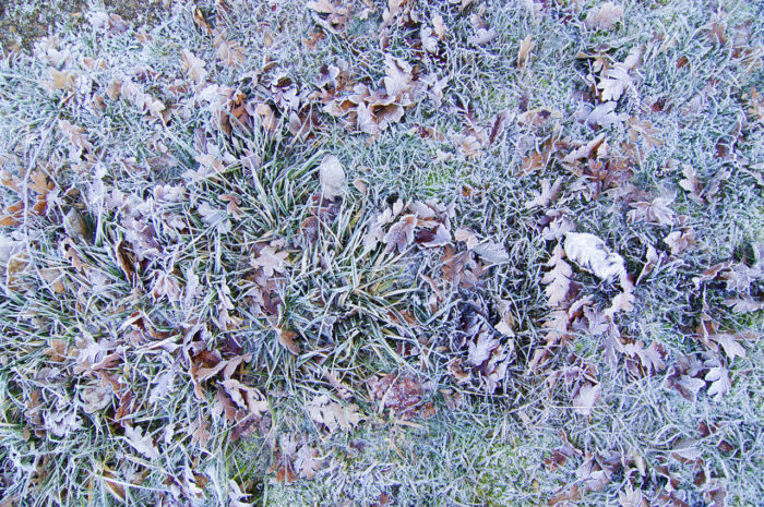2. Is that frost?