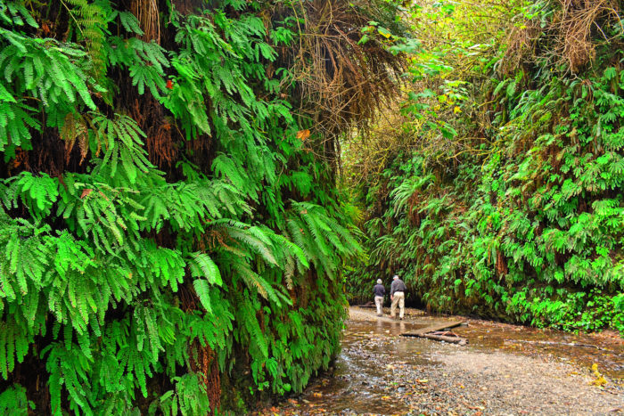 3. Explore Fern Canyon.