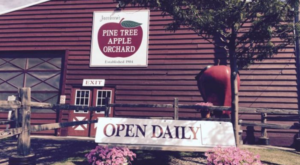 These 10 Charming Apple Orchards In Minnesota Are Picture Perfect For A Fall Day