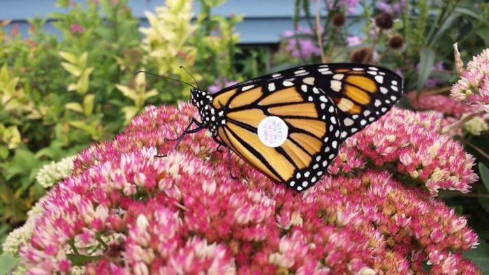 3. Monarch Festival, Des Moines