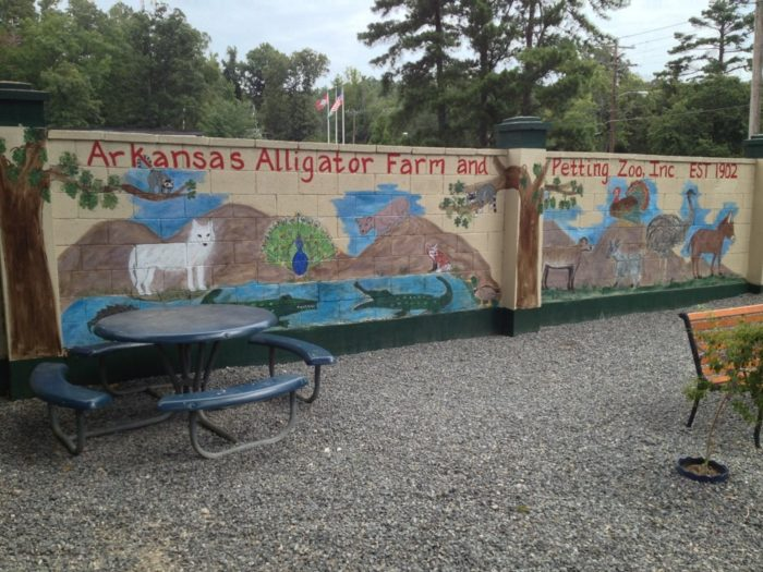 From the moment you drive up to the alligator farm you'll see a mural that shows an alligator living alongside a lemur and a turkey . . .