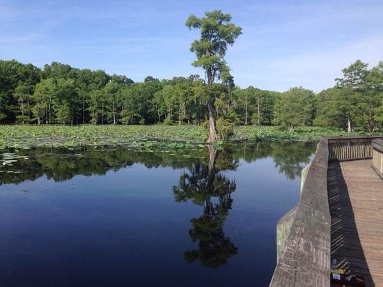 Chicot State Park is set around Chicot Lake, a gorgeous lake in central Louisiana.