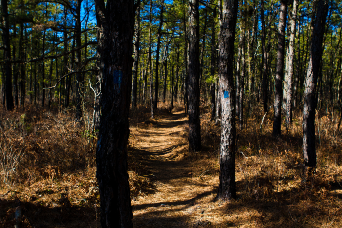 Pine Barrens Reserve
