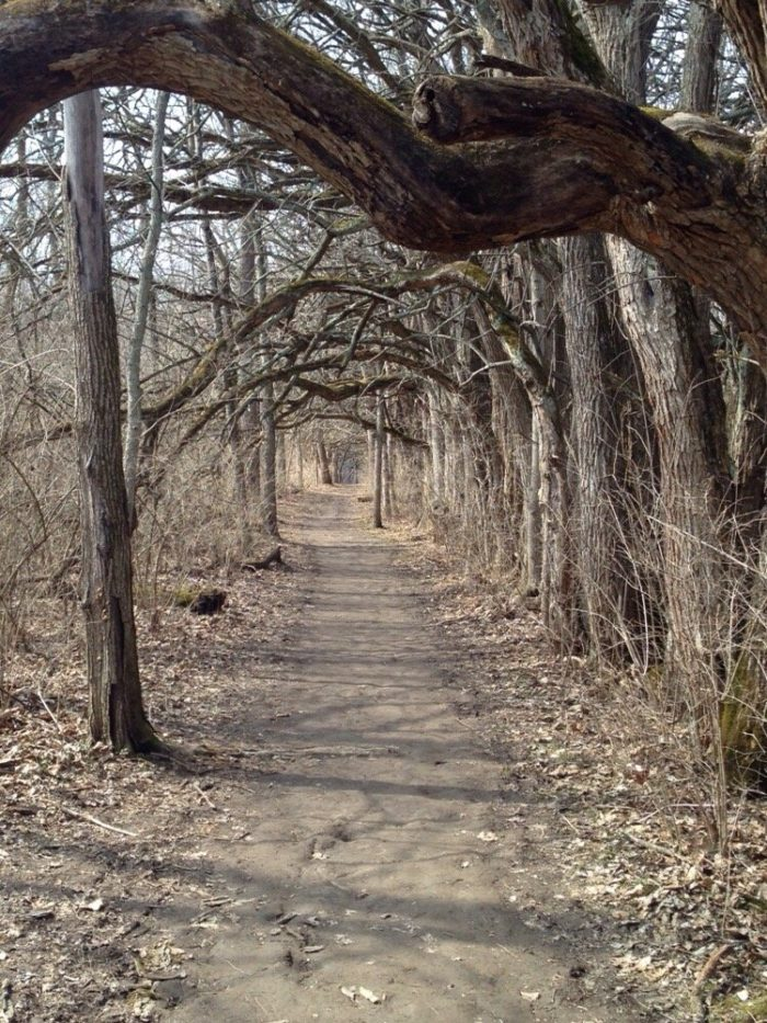 No matter the season, the tunnel is a fascinating sight to behold (even when the leaves are long gone.)