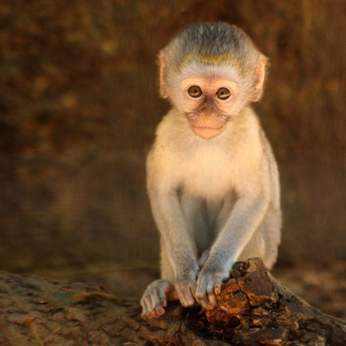 Kids will love the zoo's beautiful population of monkeys and apes. The capuchin monkeys are particularly adorable.