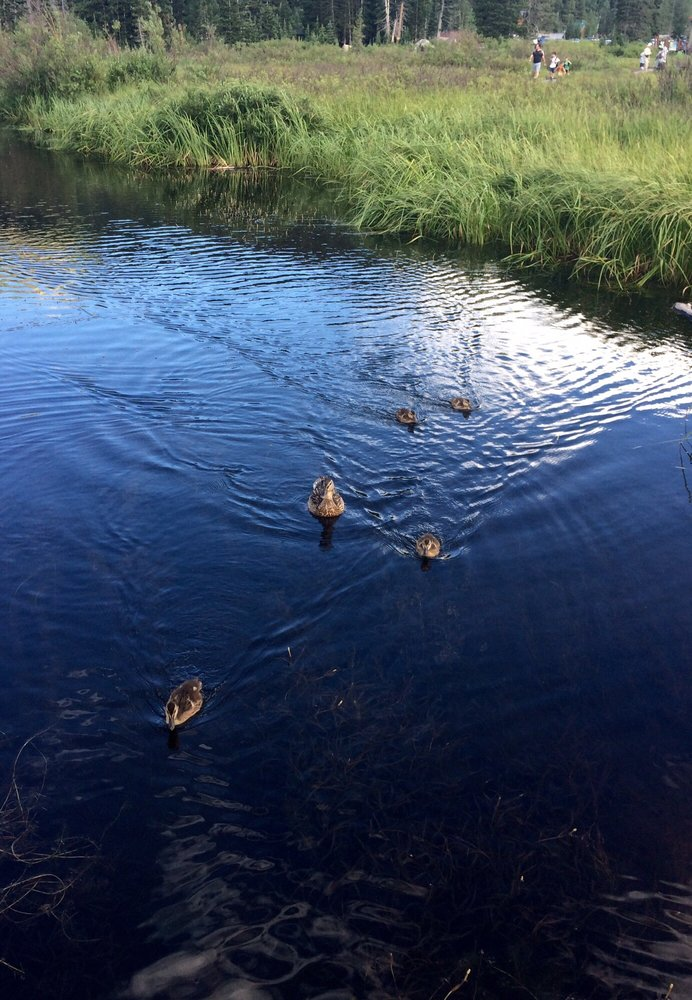 On any given day, you might see ducks (and even ducklings)...