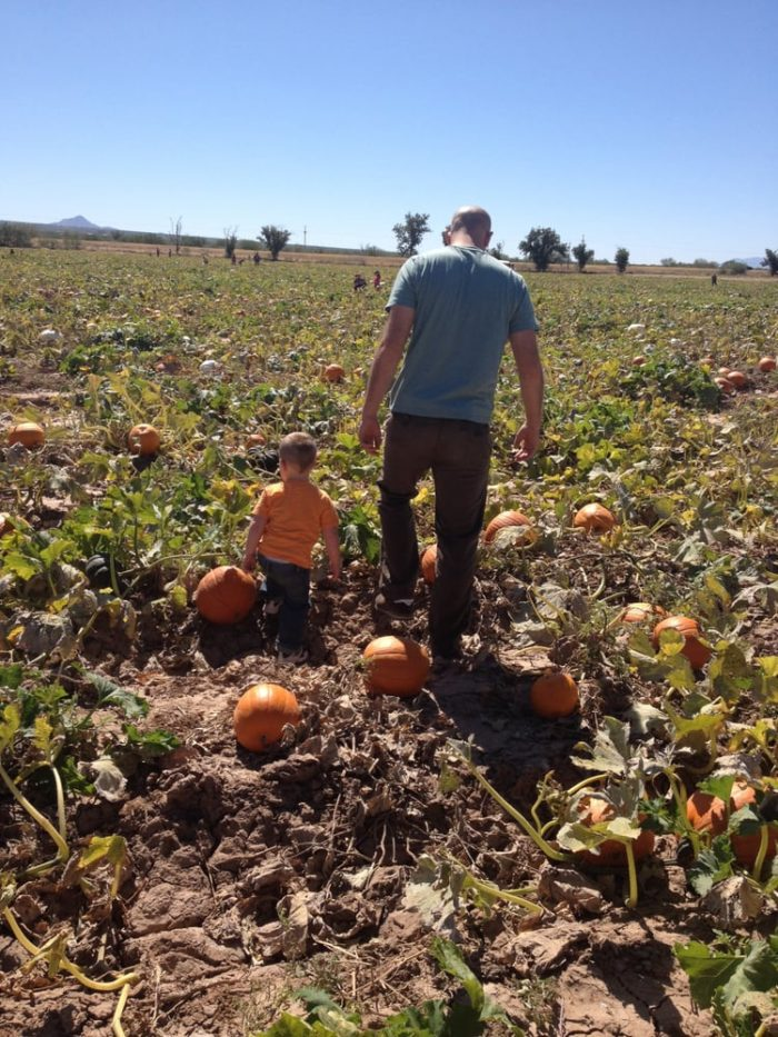 2. Buckelew Farm Pumpkin Festival and Corn Maze (Tucson)