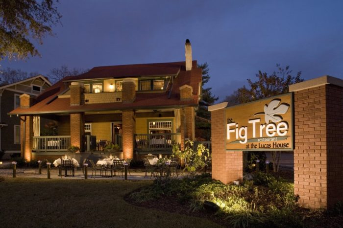 10. The Fig Tree, Charlotte