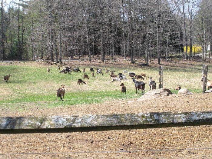 7. Rawson Brook Farm, Monterey