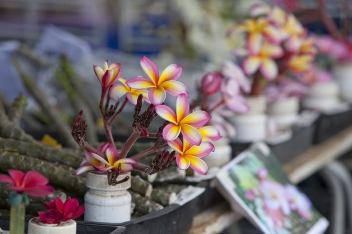 Find some gorgeous plants and flowers here - but you'll want to arrive early for the best selection.