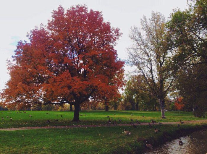 5. Lakes at Wash Park