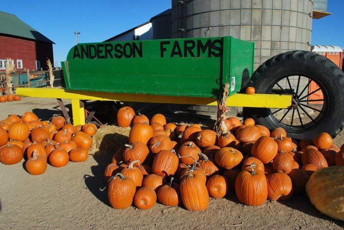 6. Anderson Farms (Erie)