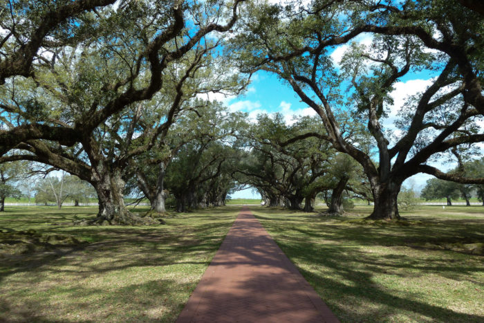 Finally on this trip you can check out Oak Alley Plantation in Vacherie.
