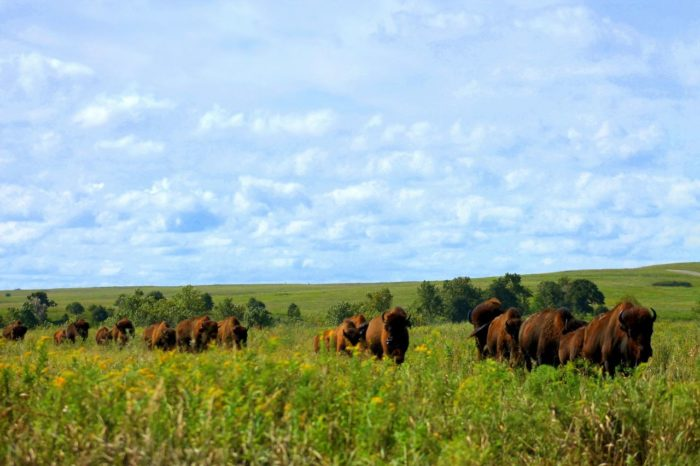 The gorgeous scenery will begin to change from lush greenery to tallgrass prairies as you travel from Bartlesville to Pawhuska along Highway 60.