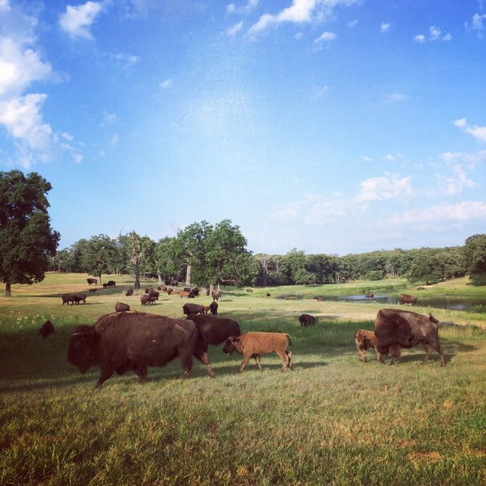 This famous estate and world class museum is a hidden gem tucked away in the scenery of Bartlesville. Take the scenic 2-mile drive into Woolaroc and if you feel like exploring, enjoy a few hours at the ranch.