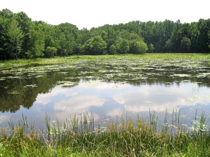 3. Patuxent State Park