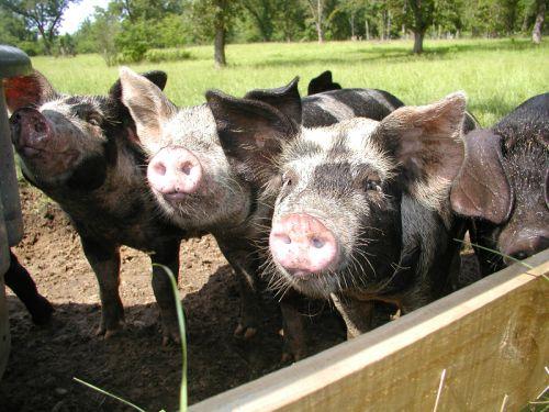 9. Pecan Point Farm - Hurtsboro
