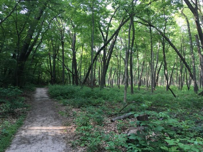 1. The Indiana Dunes State Park Loop