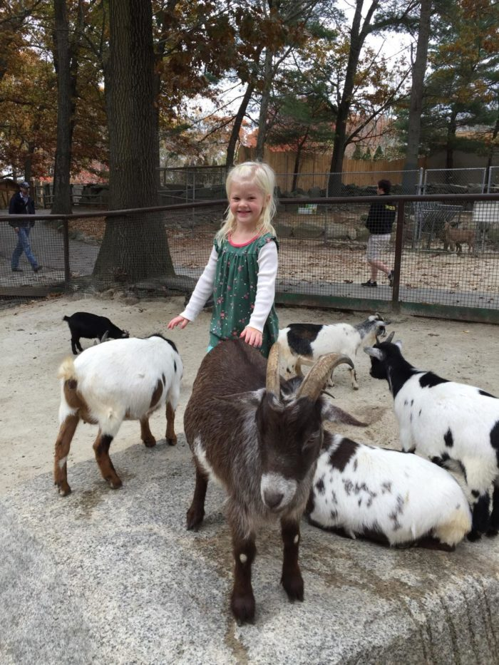 Get friendly with chickens, goats and alpacas at the awesome petting zoo.
