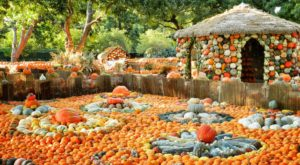 These 10 Charming Pumpkin Patches In Texas Are Picture Perfect For A Fall Day