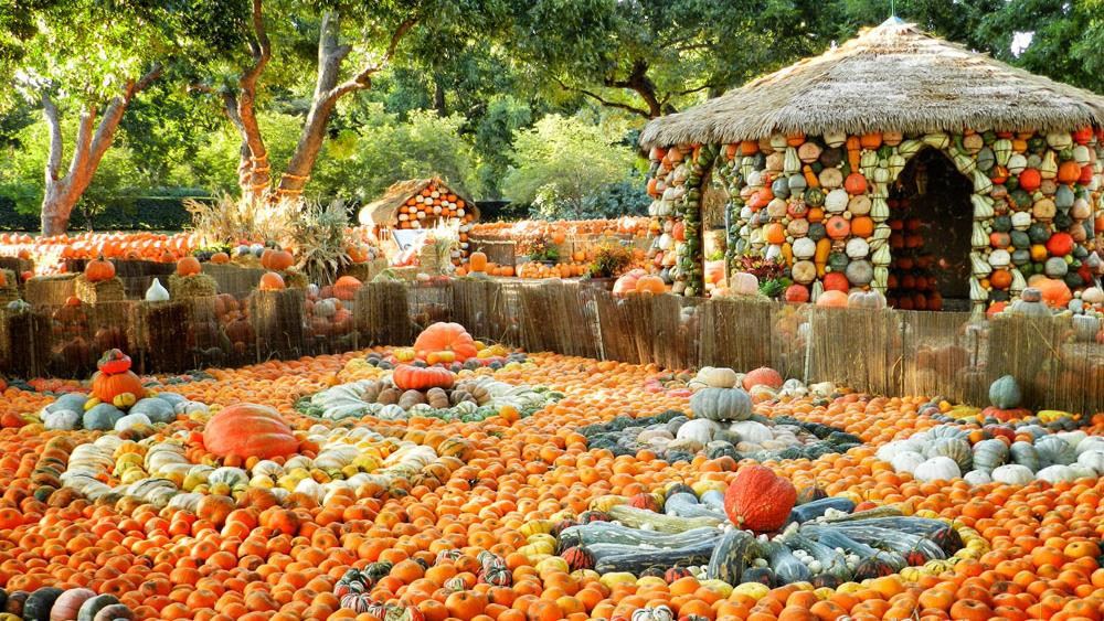 The 10 Best Pumpkin Patches In Texas In 2016