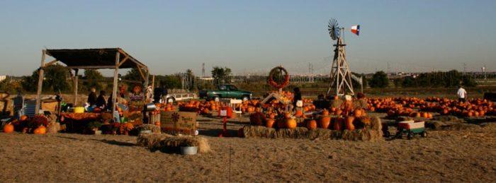 10. Pumpkins On The Prairie (Frisco)