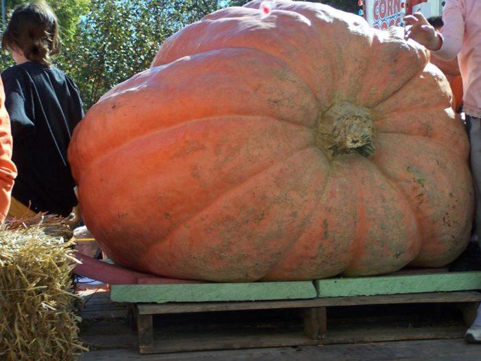 15. Pumpkinfest, Anamosa