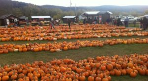 These 10 Charming Pumpkin Patches In Iowa Are Picture Perfect For A Fall Day