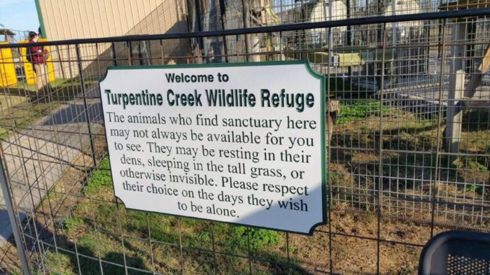Turpentine Creek is not a zoo, however, it's a rescue. Which means the animals you see there needed to be saved from bad circumstances.