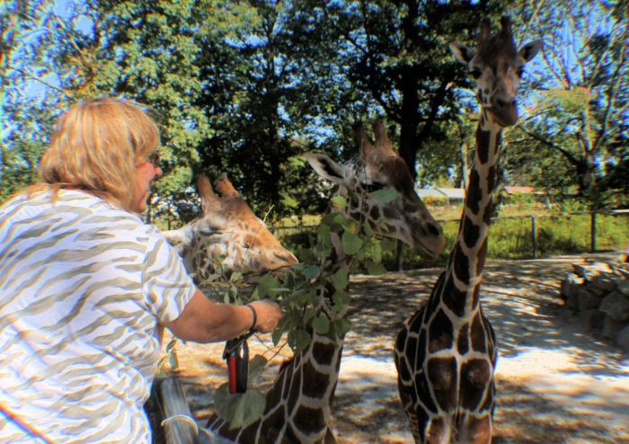 Feed a giraffe (or three) straight from your hand. That's an experience you