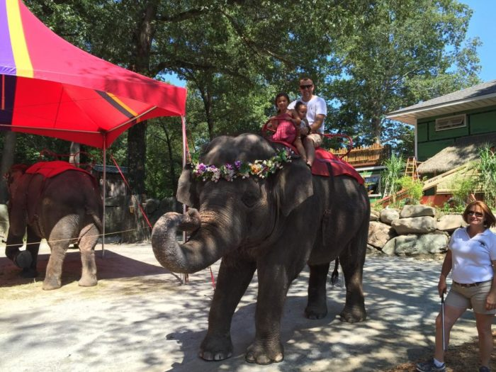 Or maybe a slow cruise on an elephant is more your style.