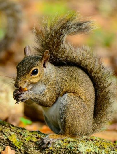 Wild inhabitants are also a common sight in wooded areas. If you visit the area later in the year, keep your eyes peeled for gray squirrels gathering acorns; head to Davis Bayou during the summer and you'll probably spot a box turtle or two.