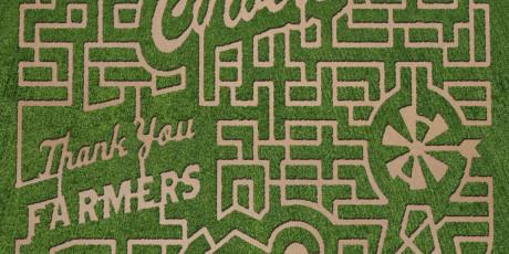 stewart maze