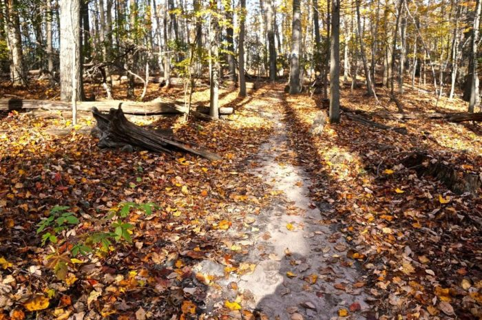 The terrain on the Northern Peaks Trail varies from rocky to softer ground and during the fall, the area is scattered with leaves.