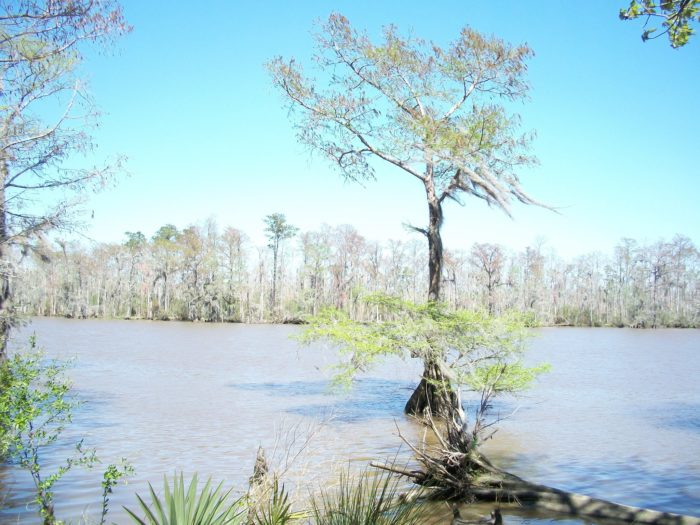 The park is found right on the Tchefuncte River, which is known for awesome fishing and boating opportunities.