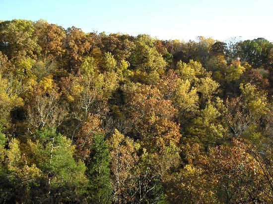 1. Clifty Falls State Park - Madison
