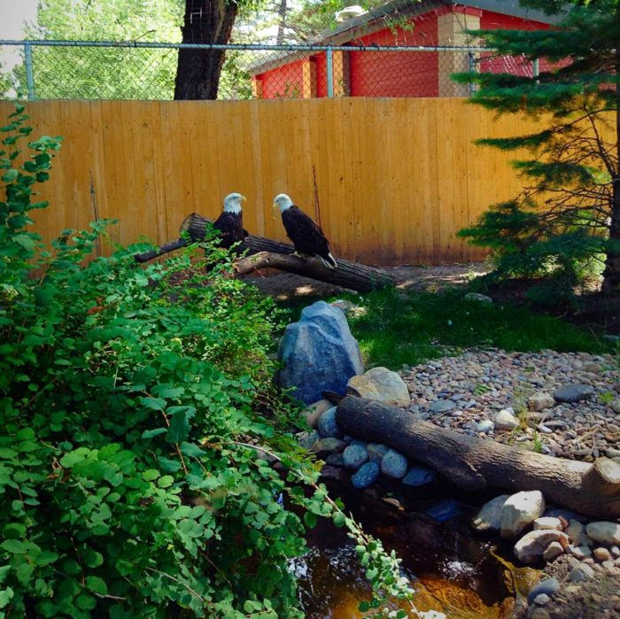 The bald eagles are a bit more standoffish.