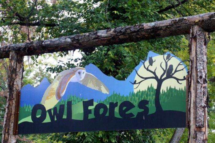 Take a stroll through the Owl Forest, where you'll see...