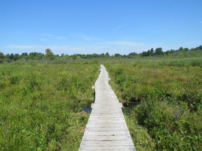 6. Little Pond Trail (White Memorial Conservation Center)