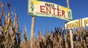 Get Lost In These 10 Awesome Corn Mazes In Wisconsin This Fall