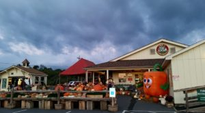 These 5 Charming Apple Orchards In West Virginia Are Picture Perfect For A Fall Day