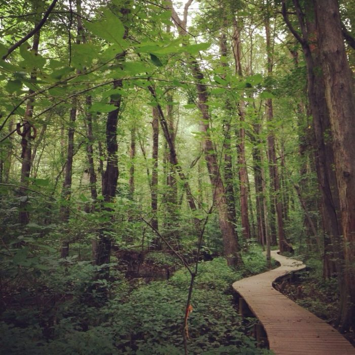 Hidden in Prince Frederick lies a charming woodland paradise that not many people know about.
