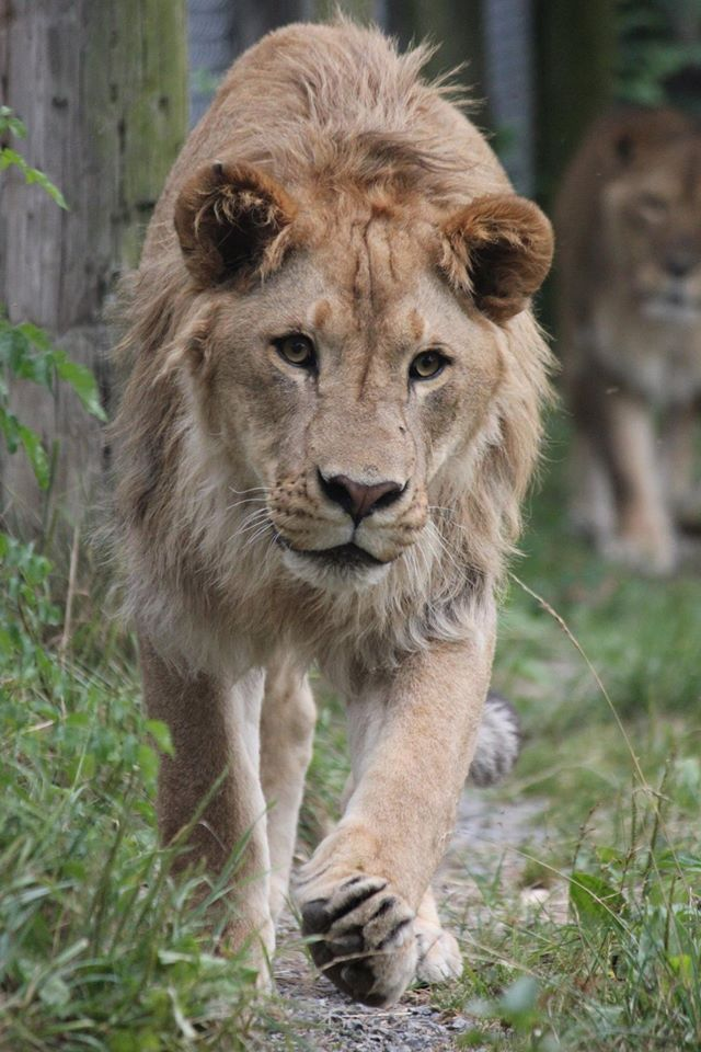 A federally, state, and locally licensed wild animal sanctuary, T&D's Cats of the World welcomes visitors on select days throughout the year, providing an opportunity for animal lovers to...