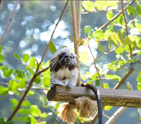 The park's Monkey House is home to a variety of primates, including howler monkeys, capuchin monkeys, ring-tailed lemurs, tamarins, and marmosets.