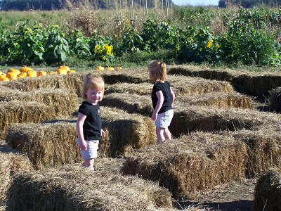 10. Farmer Jim's Pumpkin Patch and Corn Maze, Rolling Fork