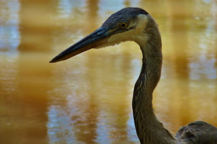 Many birds call the refuge home - it's estimated that over 200 species are found here.