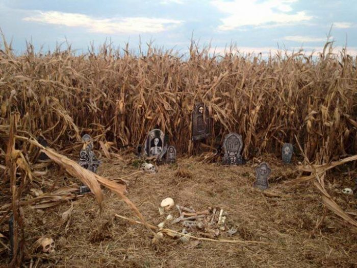 5. Farmer Jim's Pumpkin Patch and Corn Maze, Rolling Fork Mississippi