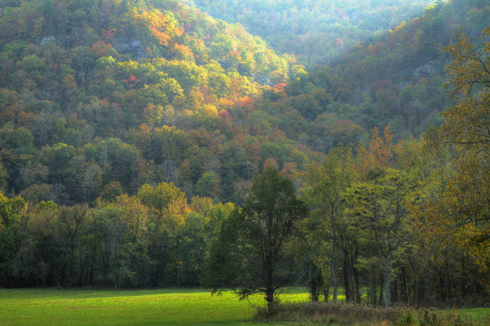 12. Really, just any part of Arkansas's National Forests