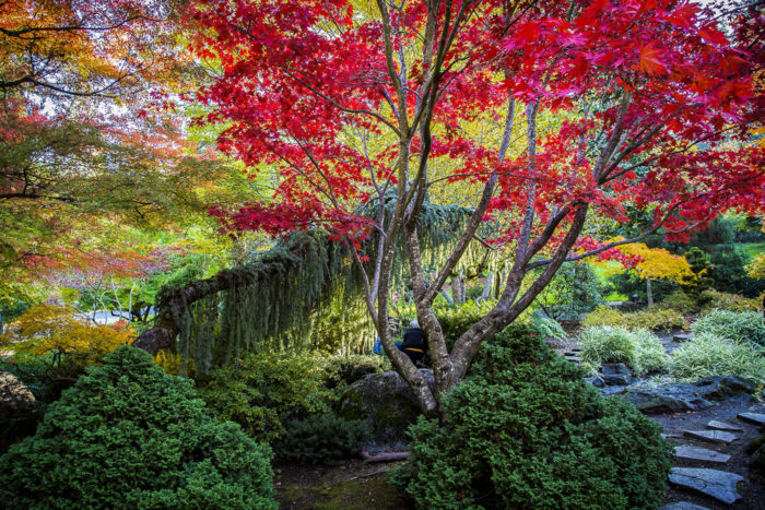 One of the most incredible things to do while visiting Ashland in autumn is to explore the incredible Lithia Park. This 93-acre park includes a Japanese garden, miles of hiking trails, a play structure, ponds, a fountain, scenic vistas, and more.